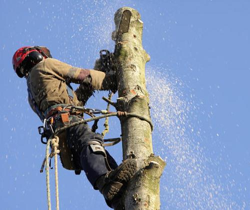 úprava stromov v mestách
