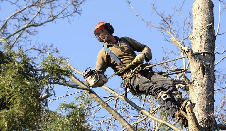 Spiľovanie stromov - Výškové práce s.r.o